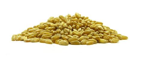 Σιτάρι - δημητριακά