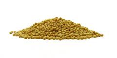 Σινάπι κίτρινο - μπαχαρικά