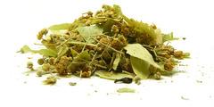 τίλιο ή φλαμούρι - βότανα