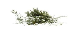 Λαγοκοιμηθιά - βότανα