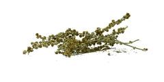 Αψιθιά - βότανα
