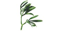 Κρίταμο σε άλμη 80γρ - βότανα μαγειρικής